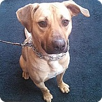 Adopt A Pet :: Molly - FOSTER NEEDED - Seattle, WA