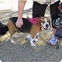 Adopt A Pet :: Bennie - Phoenix, AZ