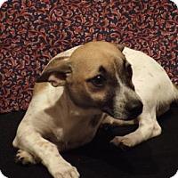 Adopt A Pet :: George - Murphy, NC