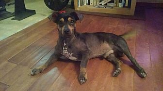 Beagle Mix Dog for adoption in Beaumont, Texas - Randy Ragball