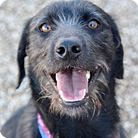 Adopt A Pet :: Ripley - Meridian, ID