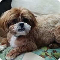 Adopt A Pet :: Diesel - Ogden, UT