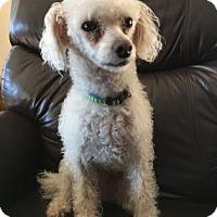 Adopt A Pet :: Swayze - Wichita, KS
