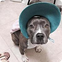 Adopt A Pet :: Missie Abigail - Raleigh, NC
