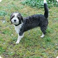 Adopt A Pet :: Jersey - Halifax, NC