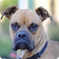 Adopt A Pet :: Timmy - Alameda, CA