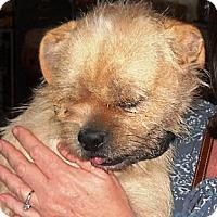 Adopt A Pet :: RUDDY - Hollywood, FL