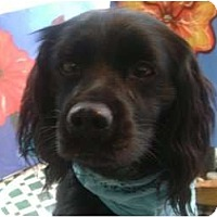 Adopt A Pet :: DYLAN - Houston, TX