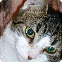 Adopt A Pet :: Winnie - Richmond, VA