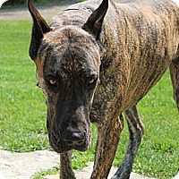 Adopt A Pet :: Cletus - Woodstock, IL