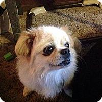Adopt A Pet :: Tito - Alliance, NE