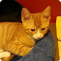 Adopt A Pet :: Dave - Scottsdale, AZ