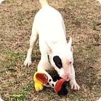 Adopt A Pet :: Vince - Columbia, SC
