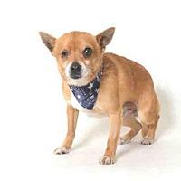 Adopt A Pet :: Ziggy - Morgan Hill, CA