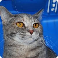 Adopt A Pet :: Phobe (LV) - Exton, PA