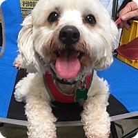 Adopt A Pet :: Rita - West Los Angeles, CA