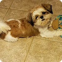 Adopt A Pet :: Tyler - San Antonio, TX