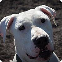 Adopt A Pet :: Daisy - Duluth, MN