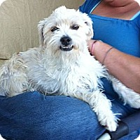 Adopt A Pet :: Ben - Temecula, CA
