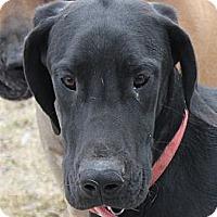 Adopt A Pet :: Loki - Woodstock, IL