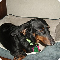 Adopt A Pet :: Colee - Louisville, CO