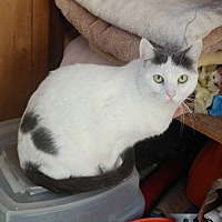 Adopt A Pet :: ROSABELLE - San Pablo, CA