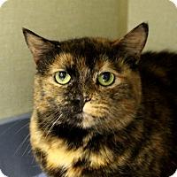 Adopt A Pet :: Marumi Kumquat - Chicago, IL