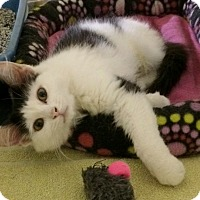 Adopt A Pet :: Skittles - Byron Center, MI