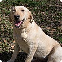 Adopt A Pet :: Faye - Kittery, ME
