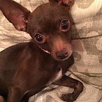 Adopt A Pet :: Maddy - Colmar, PA