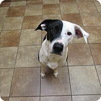 Adopt A Pet :: Lady *Petsmart GB* - Appleton, WI
