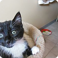 Adopt A Pet :: Bam Bam - Southington, CT