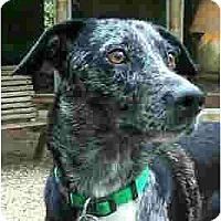Adopt A Pet :: Sheila - Kingwood, TX