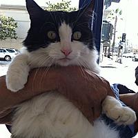 Adopt A Pet :: Abbie - Santa Monica, CA