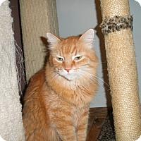 Adopt A Pet :: Tiggery - Milwaukee, WI