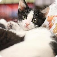 Adopt A Pet :: Mileena - Sacramento, CA