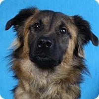 Adopt A Pet :: Daniel - Minneapolis, MN