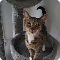 Adopt A Pet :: Charlotte - Monroe, CT