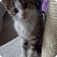 Adopt A Pet :: Orison - Stafford, VA
