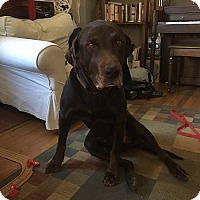 Adopt A Pet :: Gage #2 & Layla - Midlothian, VA