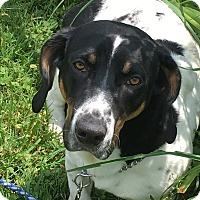 Adopt A Pet :: PARKER - LaGrange, KY