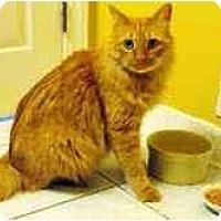 Adopt A Pet :: Strauss - Arlington, VA