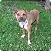 Adopt A Pet :: Clara - Chicago, IL