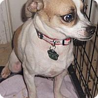 Adopt A Pet :: Pug/Beagle X - Aloha, OR