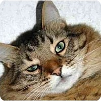 Adopt A Pet :: Mozzie - New Port Richey, FL