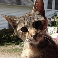 Adopt A Pet :: Dora - Salisbury, NC