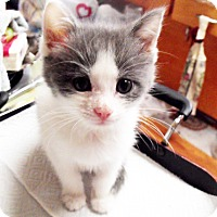 Adopt A Pet :: Pauly - Xenia, OH