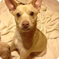 Adopt A Pet :: Penny - San Diego, CA