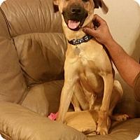 Adopt A Pet :: Levi - Knoxville, TN