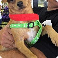 Adopt A Pet :: Ross - Ft. Lauderdale, FL